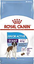 Сухий корм для молодих собак великих порід Royal Canin Giant Junior Active 15 кг