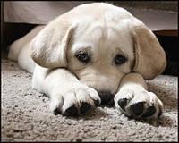 Один дома. Осенние проблемы собак