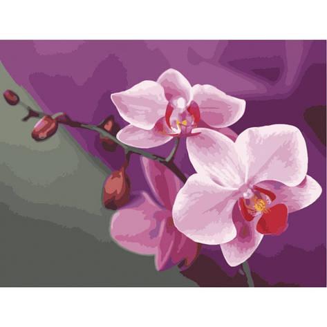 Картина по номерам Розовые орхидеи 40*50 КНО1081 Идейка, фото 2