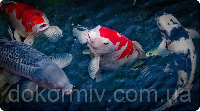 Премикс для рыб 1%