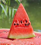 Семена арбуза Маракеш  F1 (100 сем.) Ergon, фото 3