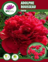 Пион травянистый Adolphe Rousseau