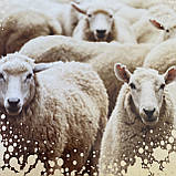 """Одеяло на овчине """"ODA"""" Размер  Евро 200*220 см   Ковдра вовняна. Стеганое одеяло., фото 4"""
