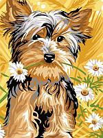 Картина раскраска по номерам на холсте 30*40см Babylon VK104 Йорк терьер с ромашками
