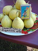 Саженцы груши Скороспелка из Мичуринска (Россия)
