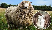 Какое одеяло лучше открытая или закрытая овчина?