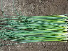 Лук шнит Бигги Enza Zaden 50 грамм семян