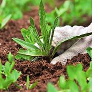 лучшие гербициды от сорняков, фото
