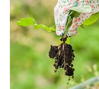 рейтинг гербицидов, фото
