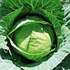 Семена капусты белокачанной Эридана F1 (1000семян) Libra Seeds (Erste Zaden)