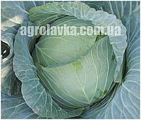 Семена капусты белокачанной Ультиматум F1 (1000семян) Libra Seeds (Erste Zaden)