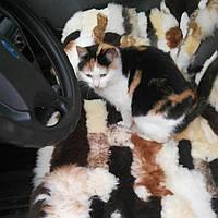Автомобильная накидка для сидений, овчина, размер 45 на 45 см,