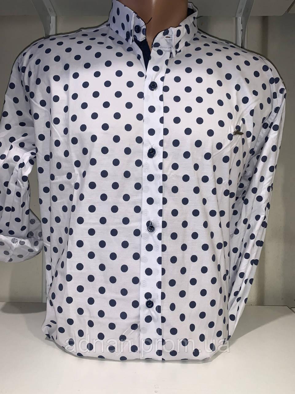 Рубашка мужская, X-Joker стрейч котон.рукав трансформер, узор - горох 2312.012 /купить рубашку