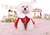 """Теплое платье, пальто для собаки, кошки """"ЛОЛИТА"""". Одежда для собак, кошек, фото 4"""