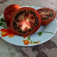 Насіння томату темно-коричневий індетермінантного Сіліврі F1 (250шт) Libra Seeds (Erste Zaden)