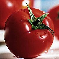 Насіння томату червоного індетермінантного Никса F1 (1000шт) Libra Seeds (Erste Zaden)