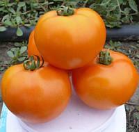 Семена томата Солидо F1 (500 сем.) Lark Seeds