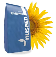Насіння соняшника Nuseed Х4219