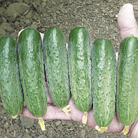 Семена огурца Стингер F1 (250 сем.) Lark Seeds