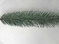 Веточка ели голубая, 23,5 см, одинарная