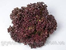 Салат Лея Enza Zaden 5000 семян