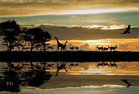 Фотообои животные, река, восход разные текстуры , индивидуальный размер