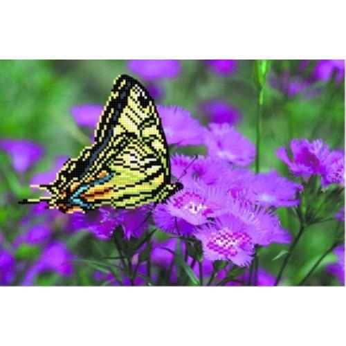 Бабочка на лиловых цветах