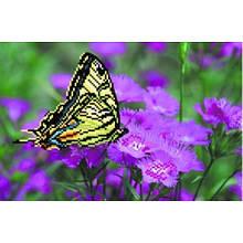 Метелик на фіолетових кольорах