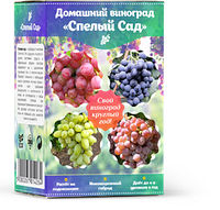 Домашний виноград - Спелый Сад, фото 1