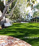 Газон Полевица побегоносная многолетняя низкорослая газонная трава клевер белый спорыш, фото 2