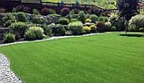 Газон Полевица побегоносная многолетняя низкорослая газонная трава клевер белый спорыш, фото 7
