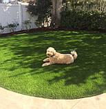 Газон Полевица побегоносная многолетняя низкорослая газонная трава клевер белый спорыш, фото 5