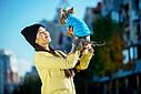 Куртка Airy Vest М 40 жилет салатово-блакитний одяг для собак, фото 4