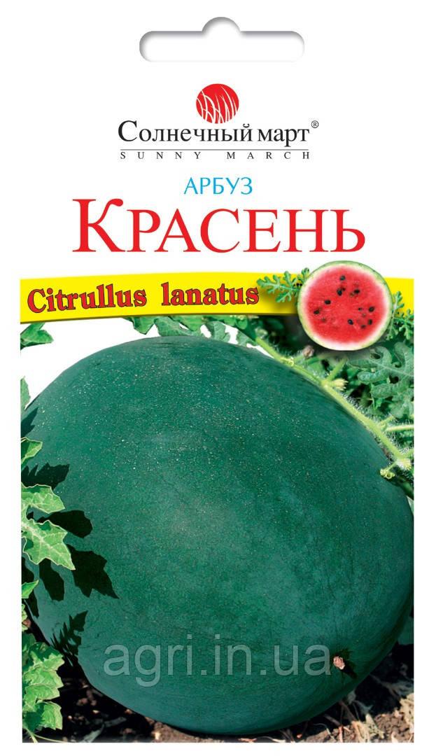 Арбуз Красень, 50шт