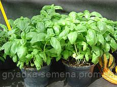 Базилик Эдвина Enza Zaden 250 грамм семян