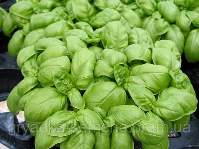 Базилик Эмили Enza Zaden 250 грамм семян