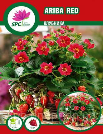 Клубника Ariba Red, фото 2