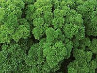 Петрушка Вега Enza Zaden 250 грамм семян