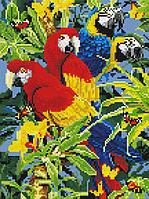 Алмазная живопись Два попугая, полная, стразы круглые