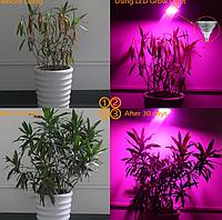 Фитолампа Е27 16Вт для цветов, зелени, рассады