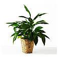 Квітковий горщик FRIDFULL, фото 3