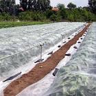 Агроволокно 30 белый 6,35*200 Усиленный край, фото 2