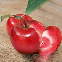 Саженцы красномясого сорта яблони Тринити