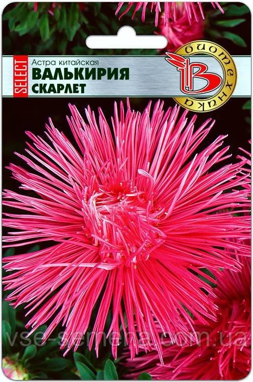 Астра китайская Валькирия селект Скарлет 30 шт (Биотехника)