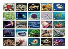 Настольная игра Мемо Подводный мир, фото 2