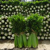 Сельдерей черешковый Танго  Bejo Zaden 10 000 семян