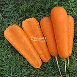Семена моркови Боливар F1 ( 2,0 - 2,25 ), 100.000 семян, фото 4