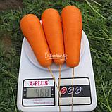 Семена моркови Боливар F1 ( 2,0 - 2,25 ), 100.000 семян, фото 5