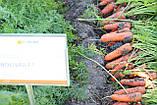 Семена моркови Боливар F1 ( 2,0 - 2,25 ), 100.000 семян, фото 6