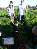 Семена моркови Боливар F1 ( 2,0 - 2,25 ), 100.000 семян, фото 8